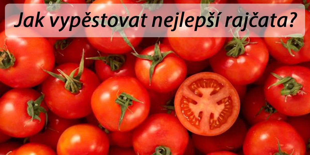 Pěstování rajčat: Krok za krokem