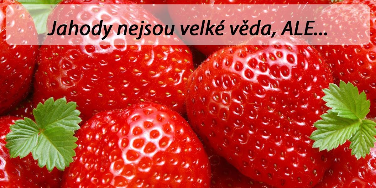 Jahody – pěstování, sázení, odrůdy