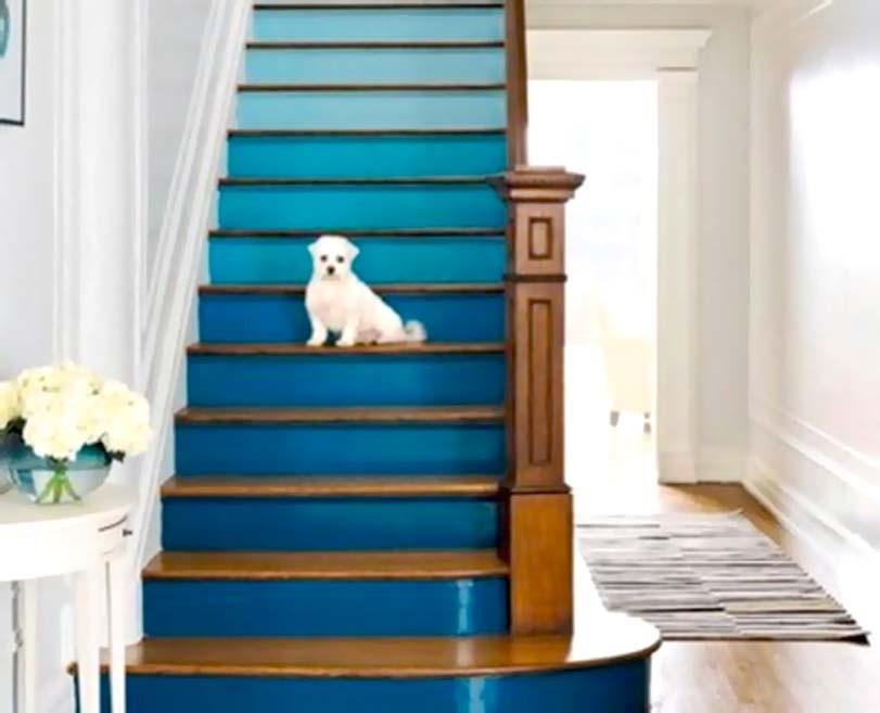 Bílý pes na modrých schodech